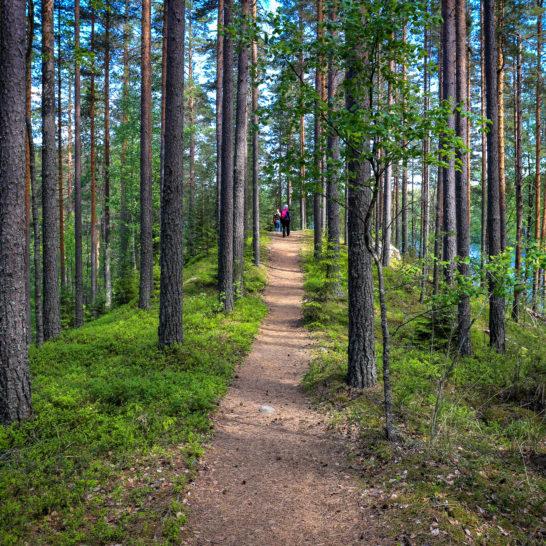 Vierumäen Lemmenharjun luontopolku Heinola Lemmenharju trail on Vierumäki