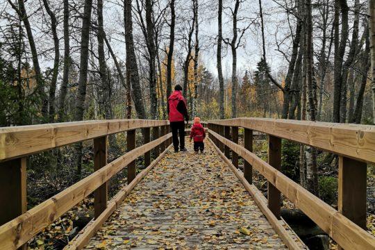 Kuninkaanpolku Ekonpolku esteetön luontopolku syksyn lehdet lapsi luontopolulla nature trail autumn