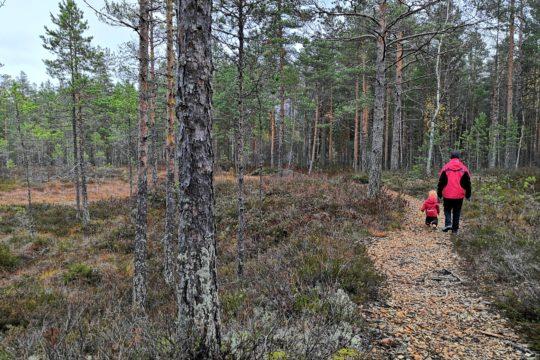 Hartola Kuninkaanpolku lapsi polulla suon reuna nature trail