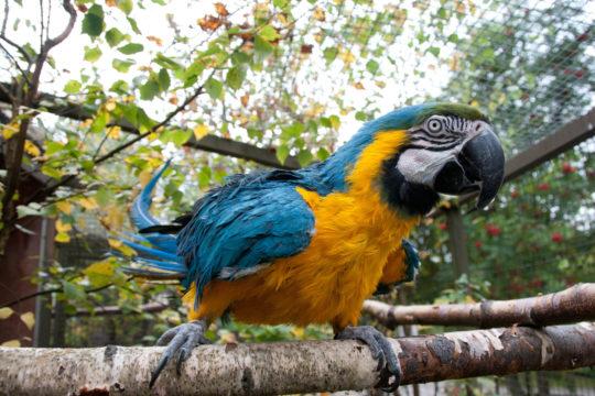 Heinolan lintutarha birdsanctuary papukaija parrot