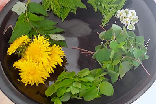 Hortalautanen Edible plants