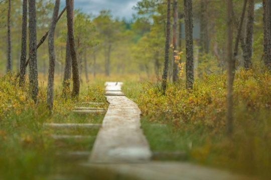 Linnaistensuo Lahti pitkospuut luontopolku nature trail swamp