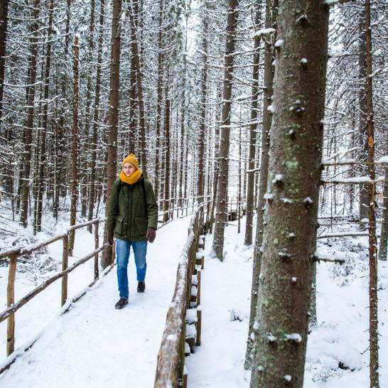 Lapakisto talvi winter