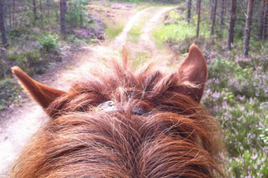 Vaellustalli Toreson Vierumäki Heinola islanninhevonen issikkavaellus islandic horse