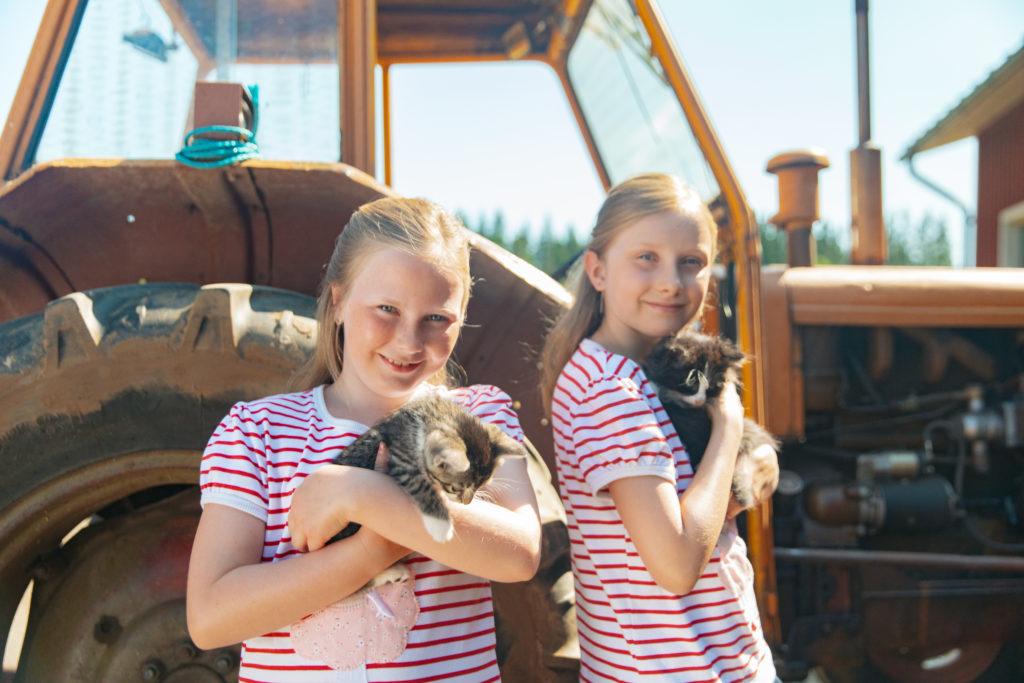 Korven karitsa kotielänpiha domestic animal farm