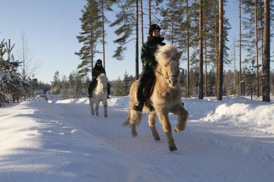 Toreson hevoset talvi
