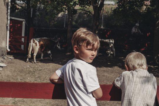 Yli-Marolan kotieläinpiha lehmät cows