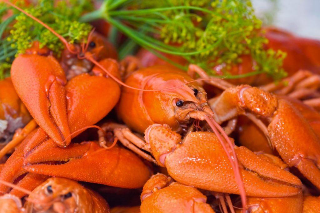 Rapu Crayfish