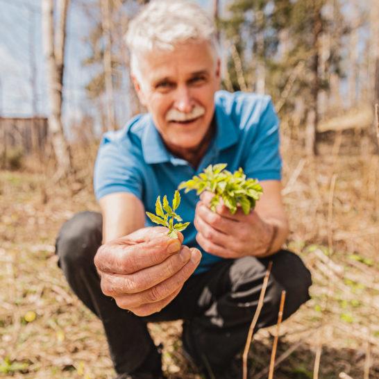 Horta villivihannekset Edible plants