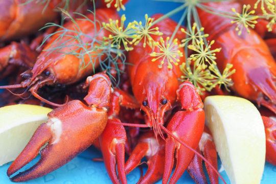 Ravut_Crayfish